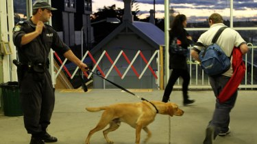 Police sniffer dogs at work at St Peters train station in Sydney ... more than two-thirds of searches do not find drugs
