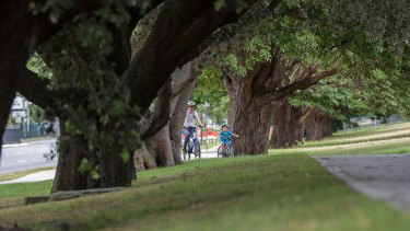 Trees in Alison Road in Randwick will face the chop in favour of the light rail line.