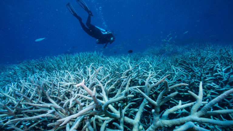 Divers looking at fish and coral life on the Great Barrier Reef.