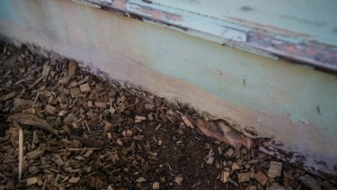 Exposed asbestos that was disintegrating on one of the houses that used to take up the site.