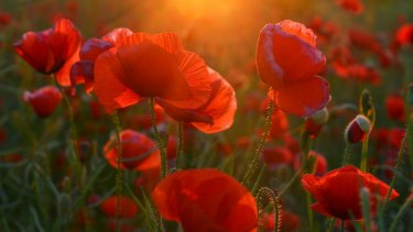 Jackie French Past Crimes And A Passion For Poppies