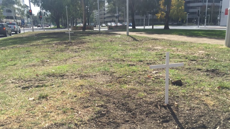 White crosses on Northbourne Avenue between Alinga Street and Barry Drive, marking the place where trees have been felled.