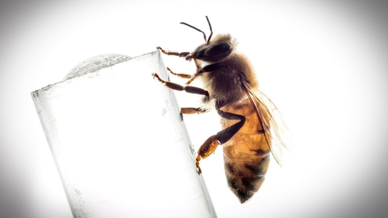 Without bees some food production chains would falter.