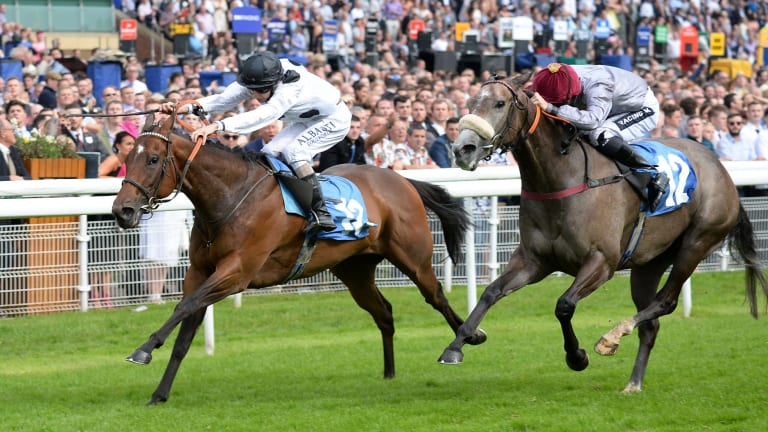 Mum's the word: Champion sprinter Marsha wins at York. She fetched 6 million guineas at auction this week.