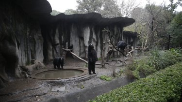 Bears roam in their enclosure at the former Buenos Aires Zoo in Argentina on Friday.