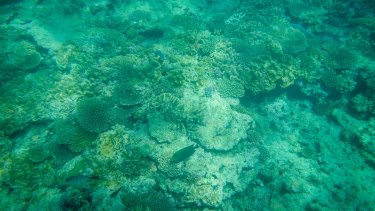 Warning signs: Coral bleaching on the Great Barrier Reef.