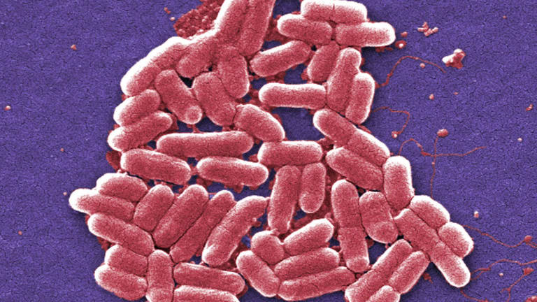 Drugs which kill off gut bacteria are bad news for cancer patienrts.