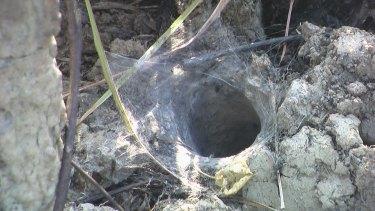 A tarantula burrow.
