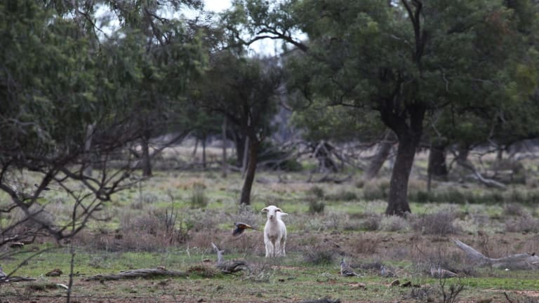 """Property owned by Barnaby Joyce near Gwabegar, described by locals as """"mongrel country"""", fit for goats and not much else."""