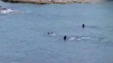 Two orcas approach, then swim past, two children in Enclosure Bay at Waiheke Island, off the coast of Auckland.
