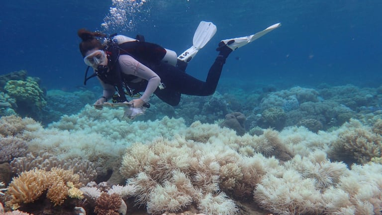 Bleaching over the previous two summer killed about half the shallow water corals on the Great Barrer Reef.