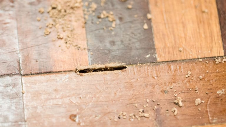 A Canberra pest controller was fined for failing to provide two homeowners with a termite certificate, meaning they could not live in their homes.
