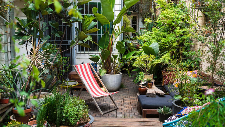 David Whitworth has created a vibrant, plant-filled, mostly potted garden in Sydney.
