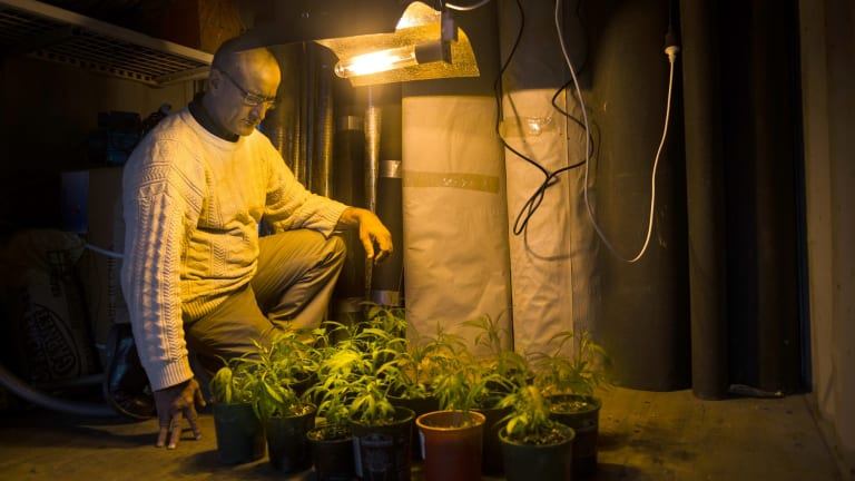 Dr Andrew Katelaris last year with a collection of small cannabis plants to be grown for medicinal uses.