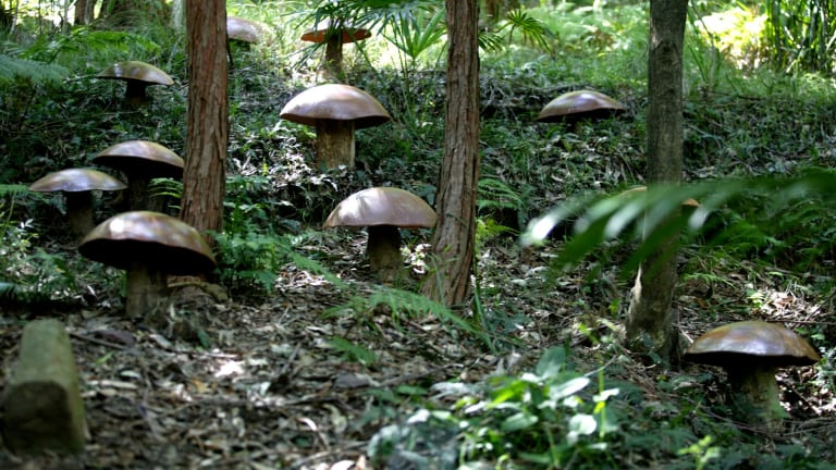 For centuries and the world over, mushrooms containing psilocybin have been ingested during religious rituals.