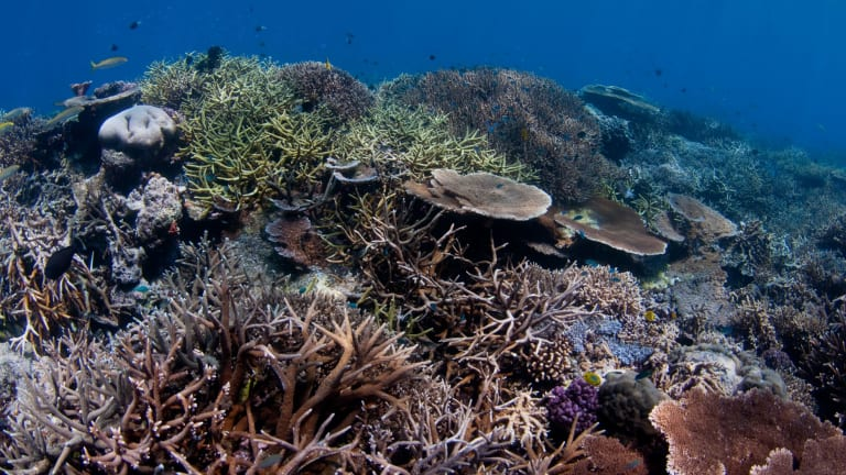 A Senate estimates hearing has been told the Abbott government has spent $100,000 to lobby against UNESCO listing the Great Barrier Reef as in danger.