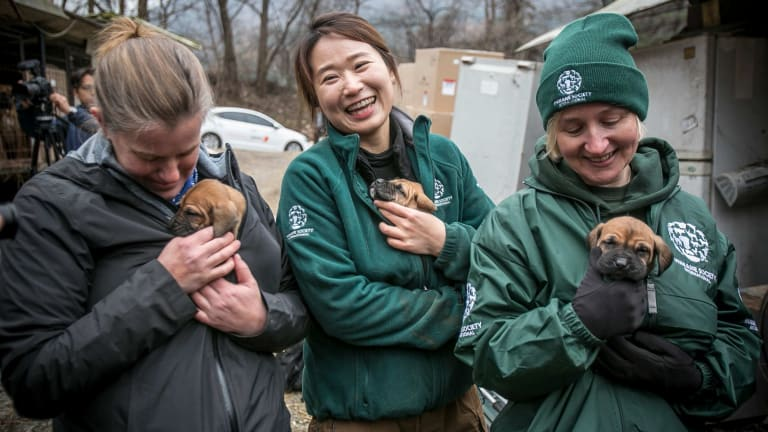 (From left) Abby Hubbard, deputy director of the Animal Welfare League of Alexandria; Nara Kim, Humane Society International's campaign manager for South Korea; and Wendy Higgins, HSI director of international media, hold Tosa puppies that were born at Mr Kim's dog meat farm.