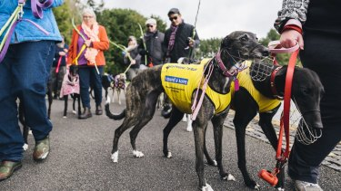March for the murdered million greyhounds at Nara park.