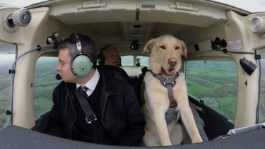Reggie, a Labrador cross, was taught to fly a plane.