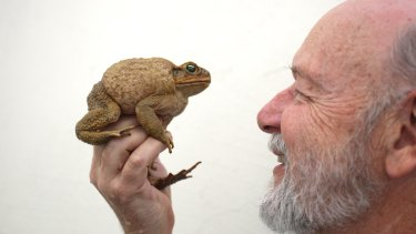 Professor Rick Shine has shown the most humane way to kill cane toads is to freeze them.