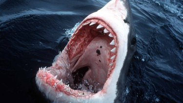 CSIRO has confirmed that WA is Australia's great white shark hot spot
