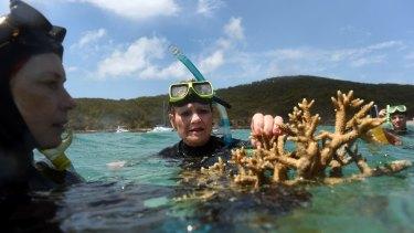 One Nation Senator Pauline Hanson assesses some coral near Great Keppel Island.