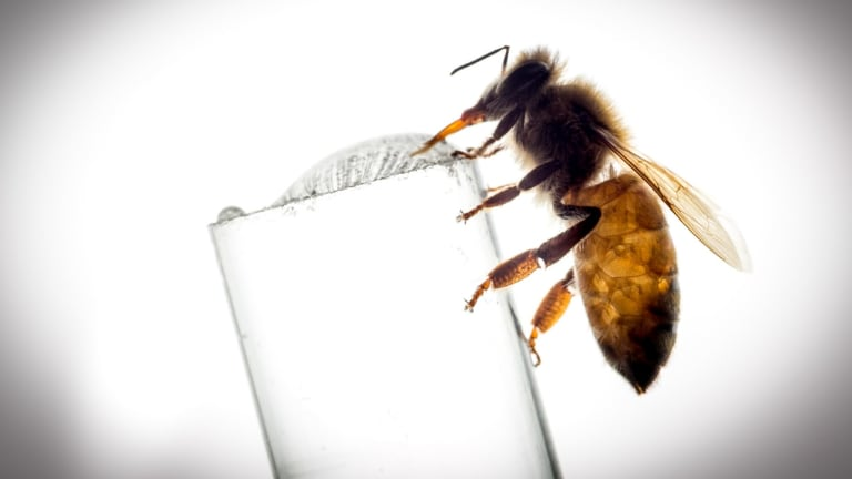 Bees could benefit from the use of funnel web spider venom in pesticides.