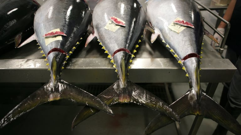 """""""Commercial fishing is deemed as the most dangerous job on the planet:"""" Michelle Hutchison, finder.com.au."""