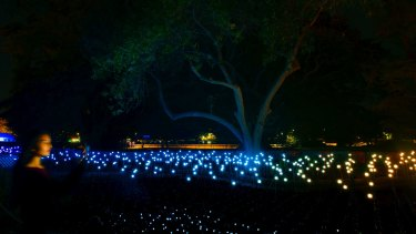 Oasis is a sea of dancing lights in the Royal Botanic Garden.