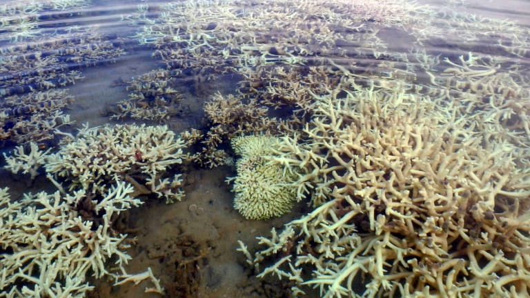Coral bleaching off the Kimberley coast of Western Australia in 2016 - part of a global event that isn't over.