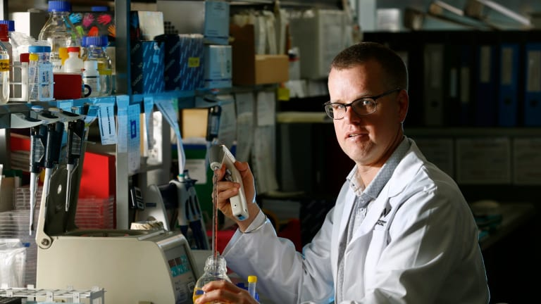 Dr Stuart Mannering at work at St Vincent's Institute of Medical Research.