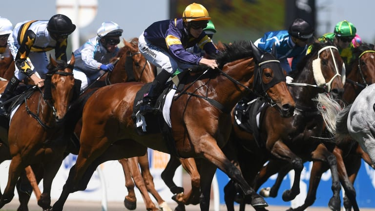 Royal flush: Vengeur Masque and Patrick Moloney (yellow cap) take out the Queen Elizabeth Stakes.