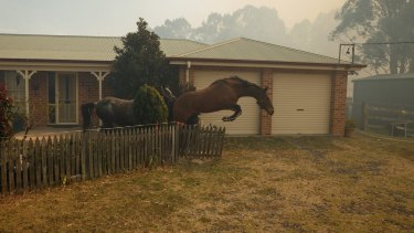 Horses break through a fence after a helicopter landed in the paddock nearby on Richmond Vale Road.
