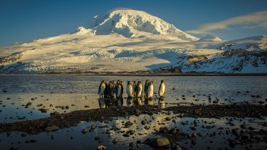 """Abundant with life:"" Penguins on Heard Island."