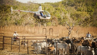 The Northern Territory live cattle trade is heavily dependent upon Indonesia.