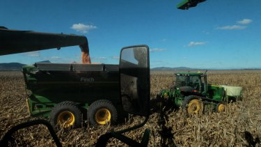 The corn harvest on the Liverpool Plains this week.
