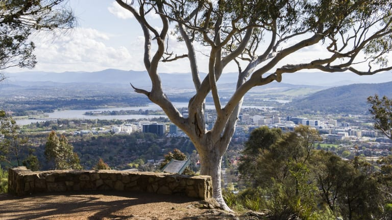 The track near the peak of Mt Ainslie.