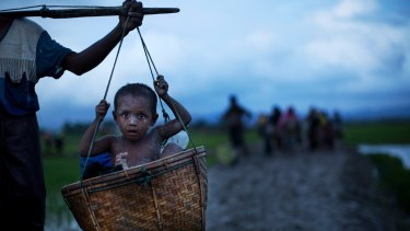 An ethnic Rohingya child from Myanmar is carried in a basket past rice fields after crossing over to Bangladesh.