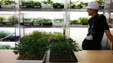 The medical marijuana industry has boomed in North America and Europe.