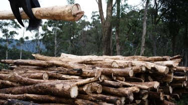 Forestry Corporation NSW has been fined $8000.