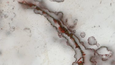 Filaments from the Canadian rocks that scientists say show structural evidence of early bacterial life.