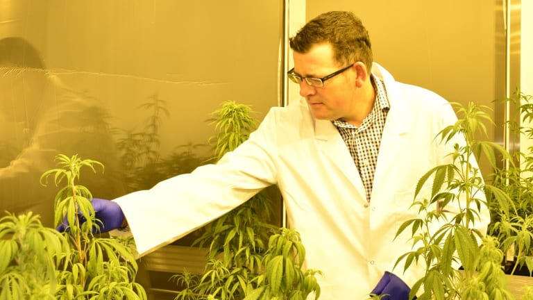 Premier Daniel Andrews inspects a medical cannabis facility.