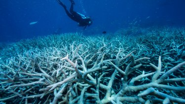 Divers looking at fish and staghorn coral life.
