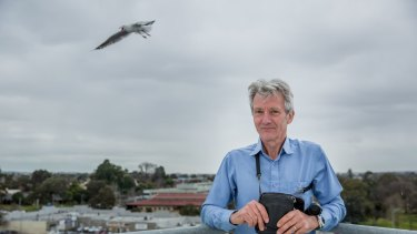 Seagulls descend on Dandenong, and it's a costly problem