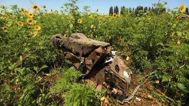 Heartbreaking: One of the pilot's seats from MH17 lies in a Donetsk field. The sunflower seeds - from the same crop that was flowering at the time of the tragedy - have now been brought to Australia.