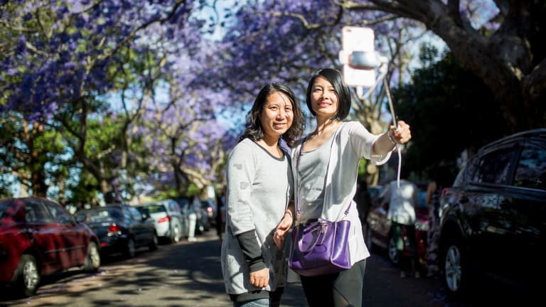 Hundreds flock to McDougall Street to take pictures amongst the jacarandas that grow on both sides of the street.