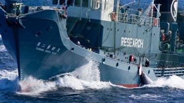 A minke whale is loaded on to the Japanese whaling factory ship the Nisshin Maru.
