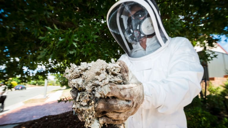 Pest control specialist Jim Beriesheff removes a wasp nest from a home in Palmerston.