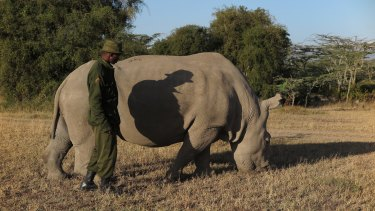 Sudan with his keeper Mutai.