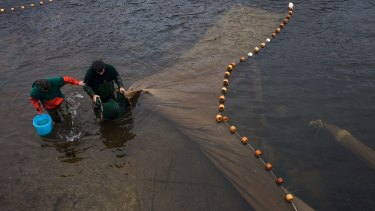 John Taylor, right, and Suzanne Smith collect elvers from nets left out overnight in Pemaquid, Maine.